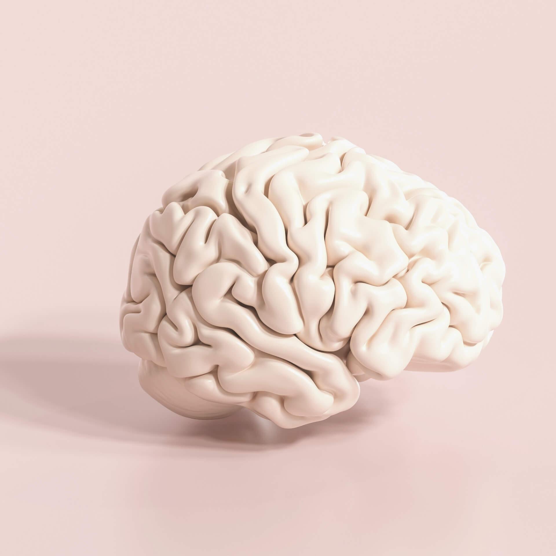 psychology of web design: A brain