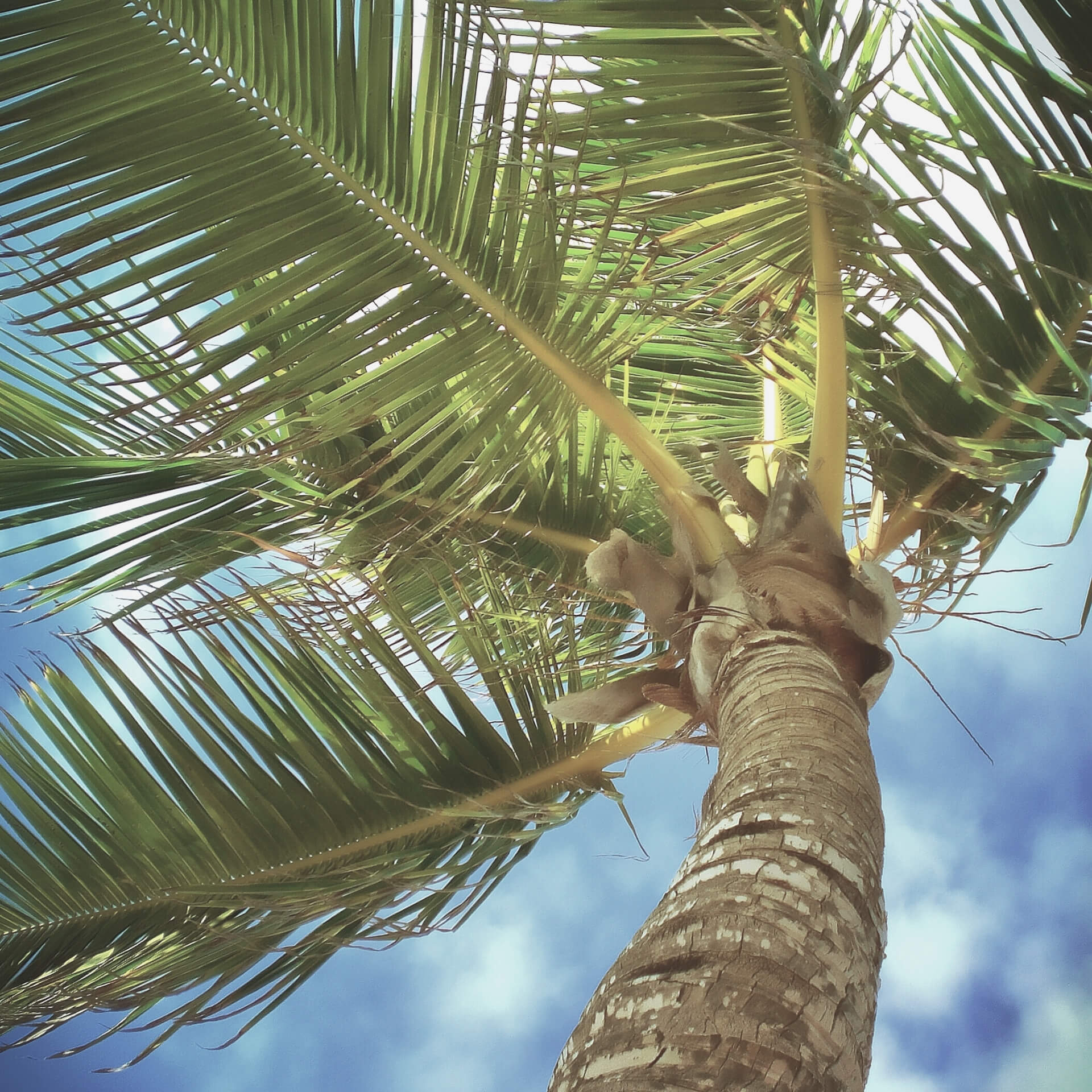 Design for sustainability: Viewpoint of a palm tree as if looking up while standing at it's trunk.