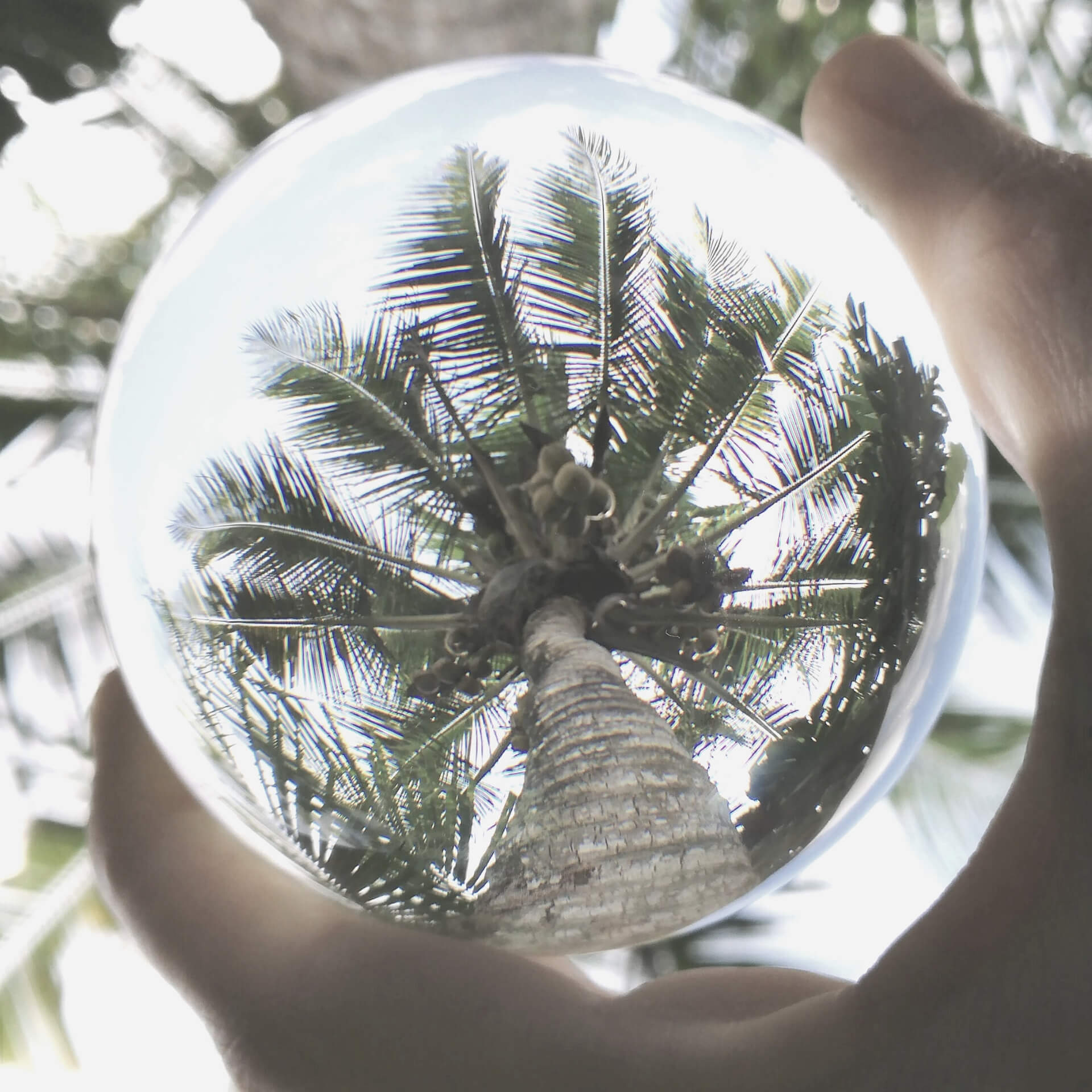 SEO predictions in 2020: Crystal ball with a palm tree in it.